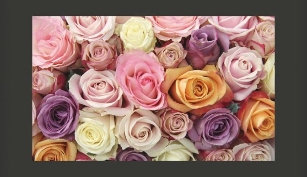 Home/Wallpapers/Flowers/Roses/Wallpaper – Pastel roses