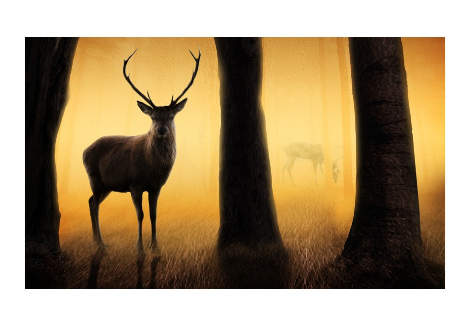 Wallpaper deer in his natural habitat 3d wallpaper for Deer wallpaper mural